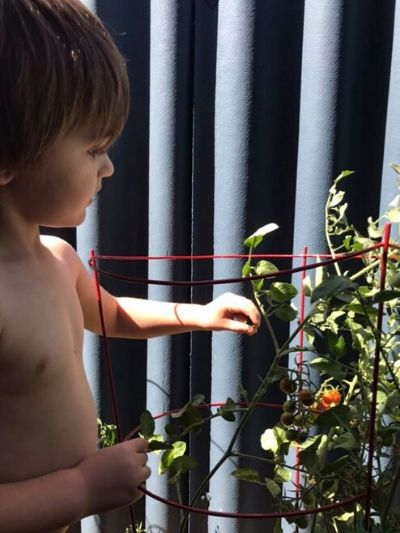 Boy picking and eating homegrown tomatoes